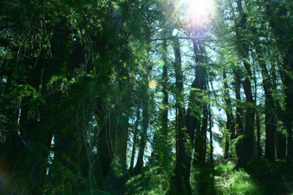 co2-compensatie door bos aanplant