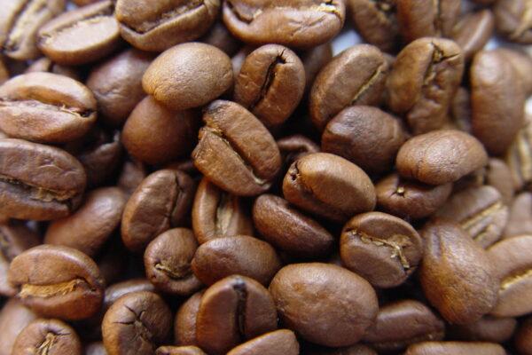 koffiedik maden vliegen